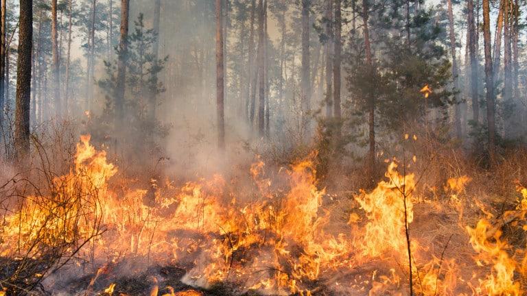 170 горски пожара потушени за денонощие у нас