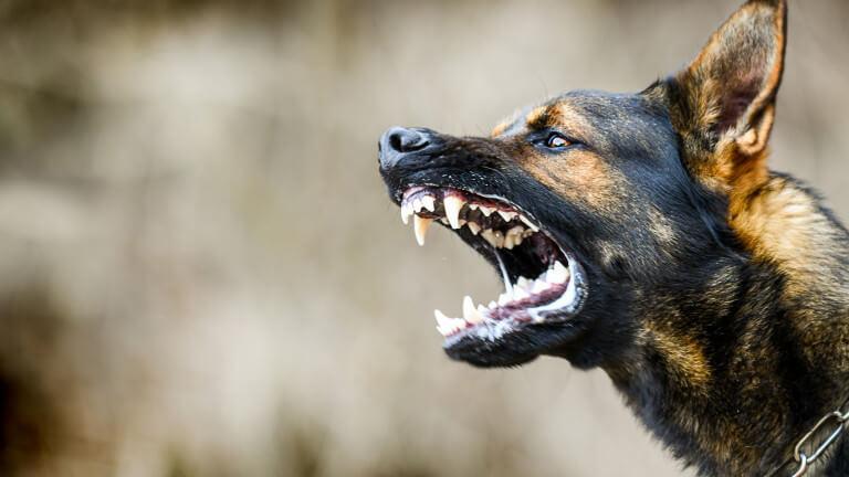 Куче нахапа две деца в двора на детска градина в Белозем